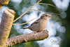 Garden Bird-1111