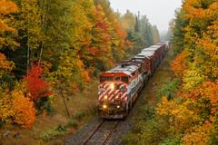 Autumn is Here (Ryan J Gaynor) Tags: canadiannational cn autumn fall fallcolours cnnewmarketsubdivision bcrail bcol train railroad railfan railway railroading scenic ontario northernontario trains photography