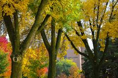 Green Bay Fall Colors-1