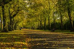 The 'avenue' in Haslam Park (Gary S Bond) Tags: great britain united kingdom 2018 a65 alpha autumn city england haslam lancashire leaves north october park preston shabbagaz sony uk west greatbritain unitedkingdom