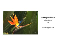 "Bird of Paradise • <a style=""font-size:0.8em;"" href=""https://www.flickr.com/photos/124378531@N04/30423649657/"" target=""_blank"">View on Flickr</a>"