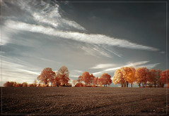 2018 10 17 Autumn Queue 720nm (Mister-Mastro) Tags: herbst autumn hiver 720nm ir infrared trees arbres bäume blätter feuilles leafes feld field