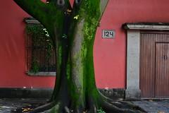 Contrast in colors (zuka_666) Tags: mexico city coyoacan colors textures nikkon nikon
