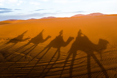 Fake Sahara desert riders (Phototravelography) Tags: shadow nomad sand saharadesert morocco camel brown orange negative ergchebbi northafrica dunes exotic profile silhouette trip maghreb dromedary art desert ride flickrfriday fake