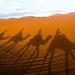 Sahara desert riders