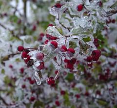 Kurze Eiszeit (Deutscher Wetterdienst (DWD)) Tags: wetter weather winter eis ice frost frosty glatteis blackice