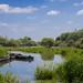 Douve du Vergne, lac de Grandlieu (44)