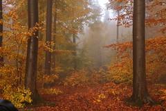Foggy Morning (wellandok) Tags: 5dii fog wood morning fograin nebelregen