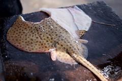 Fish sold (pan_orama) Tags: marokko maroc morocco essaouira beach harbour seagulls fish sun color travel