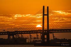 Sunrise over Yokohama Bay Bridge (aotaro) Tags: ilce7m3 sunrise bridge sal70300g morninglight sunrising kanagawa japan yokohamabaybridge