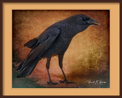 """""""Once upon a midnight dreary ..."""" (Visions by Vincent) Tags: birds nature fantasticnature topaz texture"""