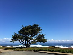 Absolutely head over heels in love with California (andreinafrazier) Tags: montereycypress cypress pacificgrove california montereybay