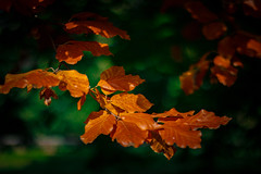Autumn is here ... 2018 (Julie Greg) Tags: colours nature nautre tree trees leaf leaves autumn park england kent autumn2018