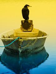 Révons éveillé , like in a dream. (thierrymuller) Tags: art animal aves animals elpadrepicture extérieur eau tamron thierrymuller photo photographie d610 d610nikon frenchtouch mamanano nikonpassion nikon bird oiseau camargue méditérranée likeinadream