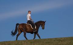 Basim_OS180068 (OliverSeitz) Tags: elbasim wachlarz elda arabian vollblutaraber pferd tier