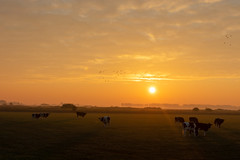 Sunrise Gewande VII (Photography by Martijn Aalbers) Tags: sunrise zonsopgang sun zon nature natuur gewande shertogenbosch denbosch noordbrabant brabant thenetherlands nederland canoneos77d ef1740mmf40lusm