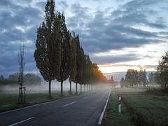 autumn sunrise, Black Forest in the back (sigi-sunshine) Tags: schwarzwald blackforest sonnenaufgang sunrise allee bäume germany badenwürttemberg badenwuerttemberg nebel fog foggy wolken clouds cloudy querbach