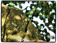 cracked (1elf12) Tags: smileonsaturday cracked stone stein harz germany deutschland winterberg rudolfklippe badharzburg
