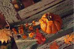 Pumpkin and calendula (kinmegami) Tags: diorama doll dollhouseminiature ooak roombox cupoche obitsu11 obitsu mattel hybrid fall polymerclay paper miniatureflowers
