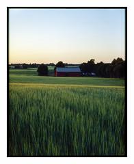 June 5th - 4x5 (magnus.joensson) Tags: sweden skåne summer june söderslätt large format 4x5 intrepid camera voigtlander heliar 21cm f45 kodak ektachrome e100g e6 exp ncps epson v800 scan