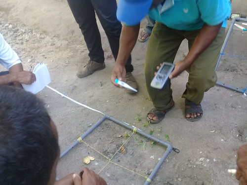 Pelatihan monitoring lamun Kabola 4