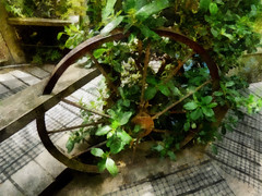 Spin the Wheel and See Where it Stops (Steve Taylor (Photography)) Tags: cartwheel wheel spokes digitalart brown green weird odd strange wood wooden newzealand nz southisland canterbury christchurch plant bush leaves foliage texture spring