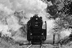 DSC_6238 (Rivo 23) Tags: bdz bulgarian state railways steam locomotive 0123 dampflok world war 2 event reconstruction ww2 battle bulgaria germany historic 1944 september операция девебаир гюешево втора световна война битка парен локомотив влак българска войска