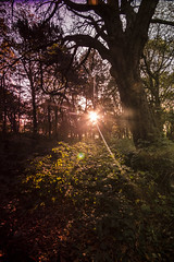 Cemetery 01 (Ian Robinson Pictures) Tags: filters sunset cemetery graveyard middlesbrough linthorpe