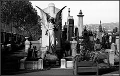 Retinette 1A  XP2 au D76t cimetière du Cret de Roc (30) (Bokey Shutter) Tags: kodakretientte1a ilfordxp2 d76 saintetienne