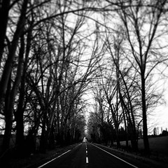 On the road. Huépil.  . . ? #photography #urbanphotography #fotografiacallejera #blackandwhite #fotosdecalle #nature #urbanphoto #travel #viaggiare #travelblogger #destination #amazing #awesome #city #pricelessmoments #life #feeling #blacknwhite_perfectio (Arturo LedeZma) Tags: ifttt instagram arturo ledezma ledezma182