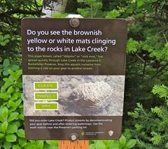 Rock Snot (William Young Fascinations) Tags: wyoming grandtetonnationalpark sign rocksnot algae lakecreek didymo laurencesrockefellerpreserve rocks bloom