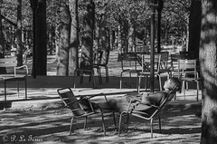 Le repos discret (jardin du Luxembourg) (letexierpatrick) Tags: jardin du luxembourg noirblanc noir black blackandwhite white bw street paris france europe extérieur explore nikon nikond7000 noiretblanc monochrome