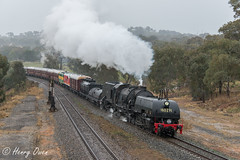 Barrelling Binalong (Henry's Railway Gallery) Tags: 6029 ad60class garratt steamlocomotive steamtrain heritagetrain thnsw transportheritagensw passengertrain 6s70 binalong