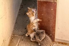 Cats (gill4kleuren - 17 ml views) Tags: pussy puss poes chat mieze katje gato gata gatto cat pet animal kitty kat pussycat poezen