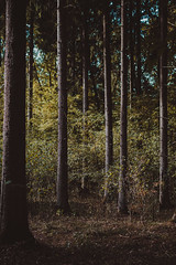 evolution    l  2018 (weddelbrooklyn) Tags: natur wald herbst landschaft nikon d5200 35mm nature autumn woods forest baum bäume laub licht tree trees leaves leaf light