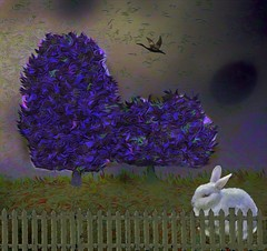 White Rabbit (Rusty Russ) Tags: bunny rabbit white blue tree bird sky colorful day digital window flickr country bright happy colour eos scenic america world sunset beach water red nature green art light sun cloud park landscape summer city yellow people old new photoshop google bing yahoo stumbleupon getty national geographic creative composite manipulation hue pinterest blog twitter comons wiki pixel artistic topaz filter on1 sunshine image reddit tinder russ seidel