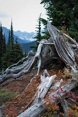 Maple Pass Loop (Taomeister) Tags: washington northcascades sigmadp2quattro maplepassloop