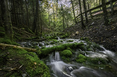 Fall flow (Alec_Hickman) Tags: fundy water fall trees leaves moss rocks forest light colors beauty nature landscape canada green orange river stream