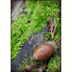 Waiting (MoodsWingz Designs) Tags: alone acorn waiting wood moss autumn fall fallen