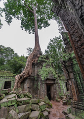 Temple overgrown with tree roots, Siem Reap Province, Angkor, Cambodia (Eric Lafforgue) Tags: abandoned ancientcivilisation angkor angkorwat apsara archaeology architecture artscultureandentertainment asia beautyinnature buddhism buddhist builtstructure cambodia colourimage environment famousplace history indochina khmer lush majestic monument nopeople oldruin outdoors rediscovered religion root ruin southeastasia spirituality temple templebuilding tetramelesnudiflora traditionallycambodian tranquility travel traveldestinations tree unescoworldheritagesite vertical wat yasodharapura camboimg9690 siemreapprovince