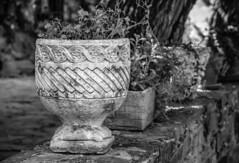 Plant pots (Jose Rahona) Tags: plantas flores jardineras macetas tiestos pots flowerpot plantpot arboles exterior terraza decorative decoration ceramica ceramic jardineria jardin garden blancoynegro blackandwhite bw bn