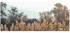 Morning (PattyK.) Tags: snapseed ioannina giannena giannina epirus ipiros balkans hellas ellada greece grecia griechenland october autumn 2018 ιωάννινα γιάννενα γιάννινα ήπειροσ ελλάδα βαλκάνια οκτώβριοσ φθινόπωρο lake pamvotida lakepamvotida ioanninalake lakeside lakefront waterfront bythelake nature nikond3100 λίμνη παμβώτιδα λίμνηπαμβώτιδα λίμνηιωαννίνων παραλίμνιο μώλοσ δίπλαστηλίμνη νερό φύση
