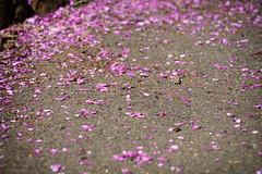 DSC01494-EDIT (whear) Tags: melbourne 墨爾本 fitzroygardens 費茲羅花園