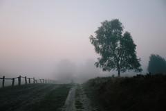Nebelmorgen (Gret B.) Tags: nebel morgen morning morgens morgennebel lüneburgerheide