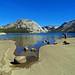 High Sierra Tenaya Lake, Yosemite NP 19-9-18