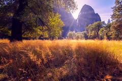 'Cream of Wheat' (JEMiguel007) Tags: cream wheat field fields yosemite gold rocks cliffs mountains landscape sun rays clouds trees