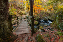 Wyming Brook Long Exposure 28.10.18-3 (Lee Myers - aka mido2k2) Tags: green autumn long exposure water river brook wyming peak district season colour color nikon d7100 sigma tokina yellow orange red brown woodland woods country countryside flow bridge explore manfrotto