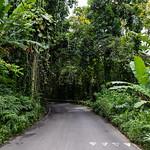 Tropical Road to Hana Maui Hawaii thumbnail