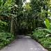 Tropical Road to Hana Maui Hawaii