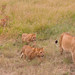 Morning Walk With The Kids, Maasai Mara